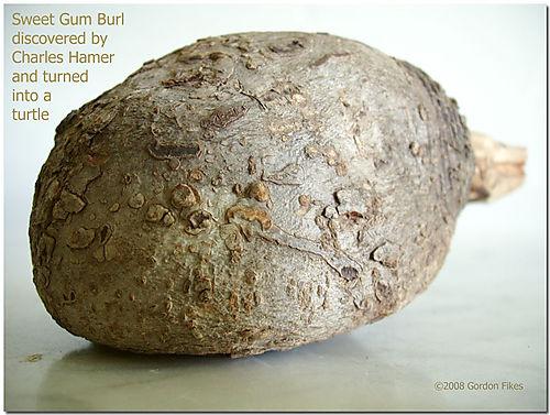 Burlturtle2