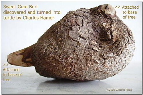 Burlturtle3