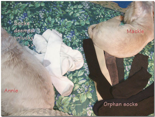 Orphansocks
