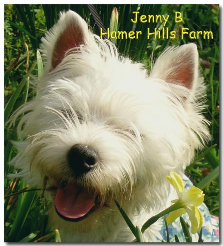 JennyBHHF