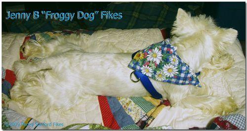 JennyBfroggydogFikes