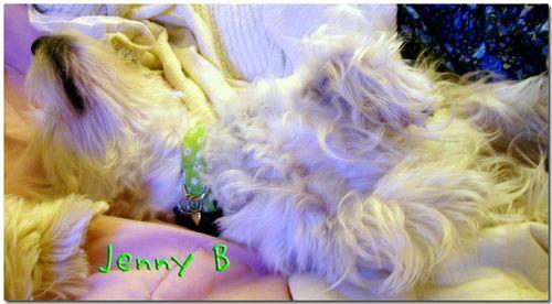 JennyBupsidedown
