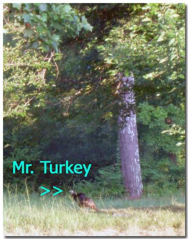 Mrturkey