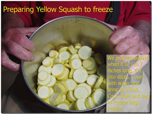 Preparingyellowsquash