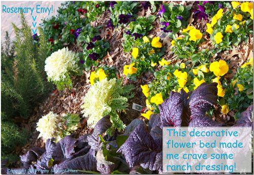 Saladflowerbed