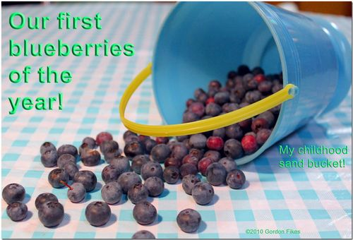 Firstblueberries