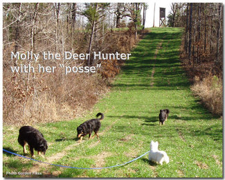 4jan06deerhunterb