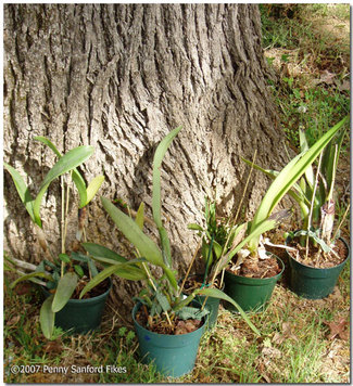 Orchidsoutside