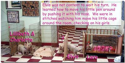 Elvismoves