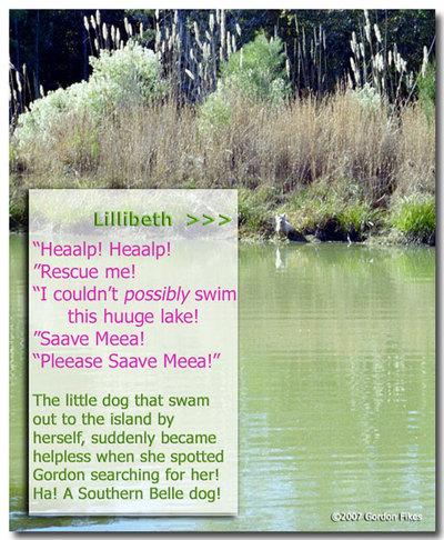 Lillibethstranded