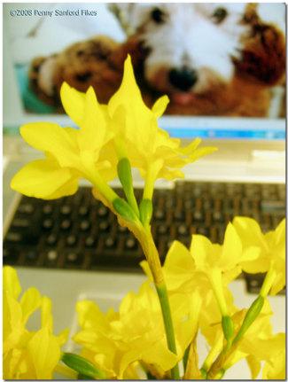 Daffodilinspiration3