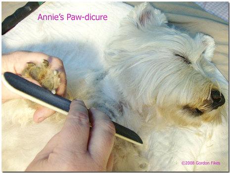Anniepawdicure